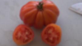 Tlacolula Tomato