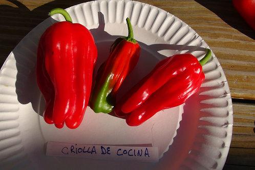 Here is the Criolla de cocina Pepper, Capsicum annuum, Scoville units: 000 SHU. This Pepper originates from Nicaragua. It is
