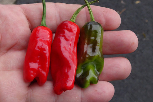 Here is the HR 215 Hot Pepperoncini Pepper, Capsicum annuum longum, Scoville units: 10,000 ~ 30,000+ SHU. This is a cross bet