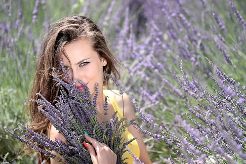 True Lavender,Lavandula angustifoliais native to the Old World and is found from Cape Verde and the Canary Islands. The flo