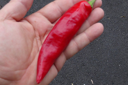 Here is the Guajillo Pepper, Capsicum annuum, Scoville units: 2,000 ~ 5,000 SHU. This pepper originates from Mexico and is of