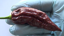 brown bhutlah pepper