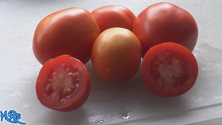 The Rio grande tomato, Solanum lycopersicum, is a highly sought after tomato! This indeterminate, regular-leaf tomato is one of the nicest sandwich tomatoes you can grow! We are very excited to bring this new variety to you. Watch the video and see how i rate this tomato. Open pollinated. Indeterminate. 65-75 days.