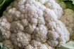 Snowball White Cauliflower
