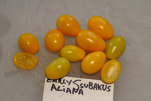 Here is the Early Ssubakus Aliana Tomato , Solanum lycopersicum. This tomato originates from Beijing, China and from the Peip