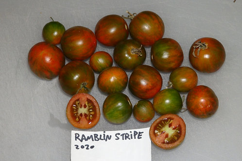 Here is the Ramblin Stripe Tomato, Solanum lycopersicum. The origins of this tomato is unknown. It is considered a hanging ba