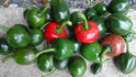 Here is the Cumra Cherry Pepper, Capsicum annuum, Scoville Units: 5,000 ~ 20,000 SHU.The Çumra Cherry Pepper originates from the city of Çumra in Turkey. They producepeppers about 1 1/2 - 2 inchesround and fruits tend to be thick walled with tougher skins. They tend to be sweeter then regular cherry peppers and make a great type for pickling! These plants can be very productive and love warm temperatures. One plant can produce dozens or more peppers. Fruits take a long time to ripen, Open pollinated, 85 days.