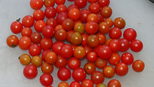 """Here is the Post Office Spoonful Tomato, Solanum lycopersicum. This tomato originates from Pittsburgh Pennsylvania USA. Here is the history as described on seed savers website: """"When she was a girl, Pittsburgh folk singer Cathasaigh encountered a very old man planting tomato plants in front of a post office. The man explained th"""