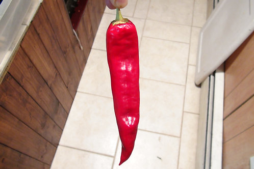 Here is the Ms. Junie Hatch Pepper , Capsicum annuum, Scoville units: 000 to 2000 SHU. This pepper originates from Hatch, New