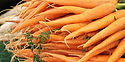 Here is the Tendersweet Carrot, Daucus carota subsp. sativus. This is a very popular carrot variety among gardeners. It is a great market variety and often sold in grocery store. is a long orange carrot and sometimes called chantenay carrot type. These long and stout carrots are an all American heirloom yielding long orange roots that grow from 7 to 12 inches long and uniform. They go great in any dish  and have a nice slightly sweet flavor to them. These carrots grow well in soft loamy soil. Open pollinated 68 to 75 days.
