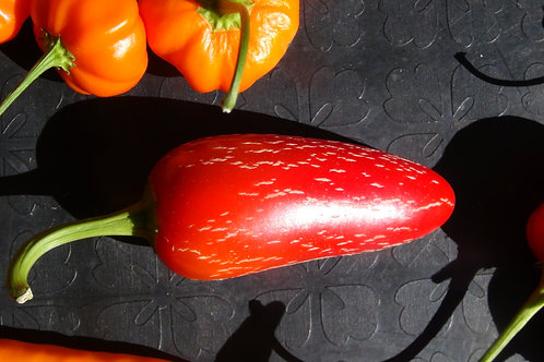 Here is the Cracked Jalapeno Pepper, also known as theJalapeños Cracked Pepper, Capsicum annuum, Scoville units: 10,000 SHU.