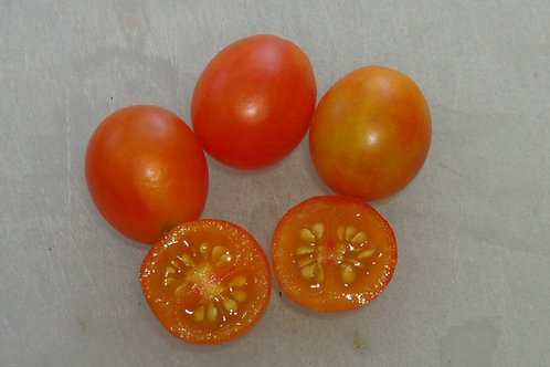 Here is the Isis Candy Tomato, Solanum lycopersicum. This tomato originates from New Jersey, USA and was created by Joe Bratk