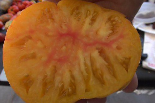 Here is the Big Rainbow Tomato, Solanum lycopersicum, It is a beautiful beefsteak type tomato with yellow-orange color an hea