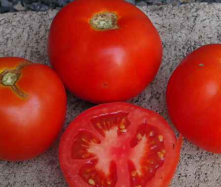 Here is the Beefsteak Tomato, Solanum lycopersicum. This particular type of beefsteak tomato is a rather small variety. In fact it is more like a slicer type. But it is indeed a type of beefsteak tomato as you can see by the inside of the tomato. It is a heavy producer and makes a great salad tomato! Plants get to around 5 feet tall but needs good staking as the weight of the plants will bring down most tomato cages. Open pollinated. Indeterminate. 75 days.