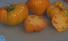 Orange German Strawberry Tomato