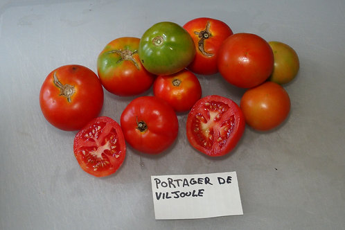 Here is the Potager de Viljoule Tomato PI 123437, Solanum lycopersicum. This tomato originates from the country of Morocco an