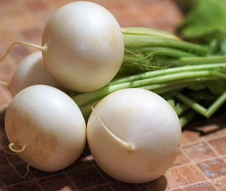 Here is the White Beauty Radish, Raphanus sativus. It is a sweet, white round globe radish with a mild flavor. It also has a white skin with a white flesh inside. This variety is a early type and as soon as the ground is not frozen anymore you can plant! Bulbs form better in cooler weather and bolt more easy in warmer weather. We like to cut this variety into slices and pickle them. Radishes can be useful as companion plants for many other crops, probably because their pungent odor deters such insect pests as aphids. This is a great starter vegetable for new gardeners. Open pollinated, 40 to 45 days.