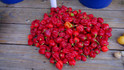 Here is the Habanero Red Pepper, Capsicum chinense, scoville units - 350,000 shu.Another HOT habanero variety. this Blocky, wrinkled, red sometimes orange habanero peppers sized 2½ by 1½ inches. The seeds collected as of 11/2019 are from a 6 year old plant! These plants can live for many year if kept right and will still produce plenty of pods through out the years. Extremely pungent, intensive, spicy chili pepper! Pick in 80 days for green peppers, and 100 days for red or orange peppers. Open pollinated, 80 - 100 days.