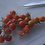 The Matt's wild cherry tomato, Solanum lycopersicum Var. cerasiforme, is originally from Hidalgo in Eastern Mexico where it g