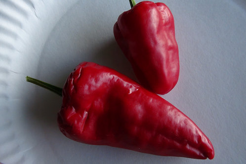Here is the Lipstick Pepper, Capsicum annuum, Scoville units: 000 SHU. This pepper variety is a type of pimiento but not flat