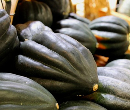 Here is the Table Queen Acorn Squash,Cucurbita pepo. This is a dark green winter squash with a yellow flesh inside with excellent flavor. It is one of the most sought after squash next to Zucchini squash. The fruits get to around 6 to 8 inches with a dark green skin sometime with over tones of orange and yellow with spots when left on the vine for to long.They are best harvested young before the Skins harden and seeds enlarge as the squash matures but you can harvest them even in their later stages and make pies and soups with it! They do have a long shelf life and the seeds are great roasted. Open pollinated 70 to 90 days.