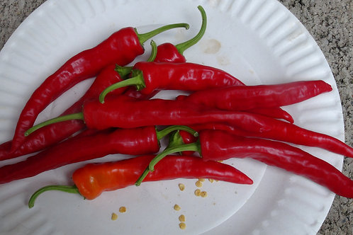 Here is the Shattah Pepper, Capsicum annuum, Scoville Units: 2,000 ~ 15,000 SHU. This Pepper originates from the middle east