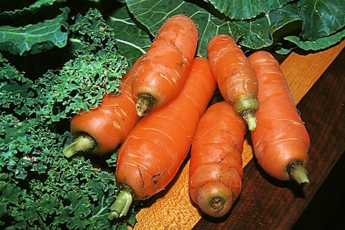 Here is the Little Finger Carrot,Daucus carota subsp. sativus. It was introduced in 19th century by the seed specialist Loui
