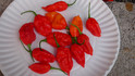 Here is the CRX Fatalii Pepper (HR), Capsicum chinense, Scoville units:25,000 ~ 125,000SHU. This is a cross between a Carolina Reaper and a yellow Fatalii pepper created by Heirloom Reviews! This pepper has the flavor of a fatalii with a hint of reaper or 7 pot but lacks the heat of a reaper. Pepper pods are flat like a fatalii but with a tail and about 2.5 inches long and red. Guessing the heat is around 100,000 SHU but may be higher. This is an F-2 and still is not stable but we will offer seeds to those who want to try it! Plants can get to 3 feet tall and compact. Open Pollinated, 85 days from transplants.