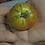 Variegated (Splash of Cream) Tomato