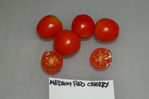 Here is the Medium Red Cherry Tomato .25 cent addition, Solanum lycopersicum. The tomato originates from our gardens in Penns