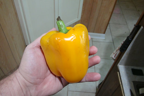 Here is the Golden California Wonder Pepper, Capsicum annuum, Scoville units: 000 SHU. The Golden California Wonder Pepper or