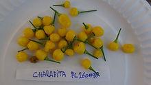 Aji Charapita Pepper