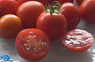 Here is the Campari Tomato, Solanum lycopersicum, new for 2019. Originally developed by a Dutch seed company in Europe, Campari tomatoes are regarded as some of the sweetest and most flavorful tomatoes in the market. They are known for their superior texture and their distinct acid and sugar balance, which gives them their signature taste. Campari tomatoes are classified as a cocktail tomato, slightly bigger than a cherry tomato but smaller and rounder than a plum tomato.