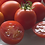 Here is the Campari Tomato, Solanum lycopersicum, new for 2019. Originally developed by a Dutch seed company in Europe, Campa