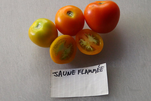 Here is the Jaune Flammée Tomato, Solanum lycopersicum. This tomato originates from Helliner, France and was created by Norbe