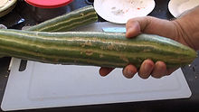 Here is the Painted Serpent, Cucumis melo var. flexuosus, Melon? Cucumber? AKA Painted Metki Serpent Melon. It looks just like an Armenian cucumber but is very different! It's more like a melon then a cuke. It has a slight sweet taste when fully ripe. It also tends to be very soft unlike a stiffness of a cucumber. We like to pick them before they are fully ripe but can be eaten either way. they can grow as long as 4 feet! Can take 2 months to develop. 70 days.