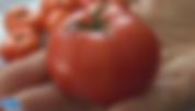 Silvery fir tomato