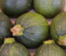 Here is the Round De Nice zucchini, Cucurbita pepo This is a French heirloom squash that dates back to the 1700's. It is a round type Zucchini that range in size from 2 inches to 4 inches round and are often light green to dark green when fully mature. This Zucchini is a semi vining type summer squash and makes a beautiful green fruit that has a rich flavor and is eaten young. Plants can be quite productive with as many as 20 per plant depending on location and how often you pick the fruits. We find them great for fresh eating and good cooked as well. Open pollinated, 60 to 70 days.