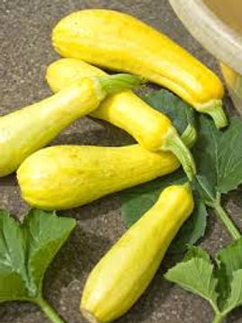 Here is the Early Yellow Straightneck Squash, Cucurbita moschata.It is also known as the Yellow Summer Squash and is a tradi