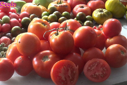 Here is the Oregon Spring Tomato, Solanum lycopersicum. This tomato originated from Oregon  USA and was developed at Oregon S
