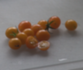 """Here is the Blondkopfchen Tomato, Solanum lycopersicum, This indeterminate, regular-leaf current tomato was originally from Germany. Blondkopfchen means little blond girl in German. It is a heavy producer an self seeds every year. We do not recommend growing this in your garden plot due to many tomatoes that drop and spread seed everywhere! They have a sweet taste with a low acid flavor. The fruits can can to 3/4"""" and 16 to a bract. Great for making sauces.Open pollinated 90 days."""