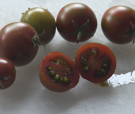 Here is the Black Zebra Tomato, Solanum lycopersicum, This tomato was originally created by Tom Wagner in the 1980s. It is a cross between a black tomato and the Green Zebra tomato and It's an large cherry tomato that will turn dark deep mahogany red with green stripping when fully ripened. They also have a marbling effect with pink and green in it. This is a great tasting tomato perfect for salads, eating fresh an snacking on in the field. Plants tend to be good producers and tend to be diseases resistant but do need some extra attention. Indeterminateopen pollinated85 days.