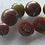 Here is the Black Zebra Tomato, Solanum lycopersicum, This tomato was originally created by Tom Wagner in the 1980s. It is a