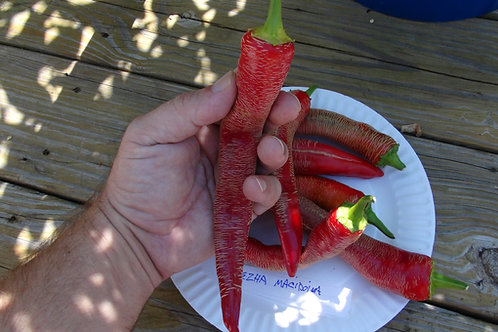 Here is the Rezha Macedonian Pepper, Capsicum annuum, Scoville Units: 5,000+ SHU, The Rezha Macedonian pepper it originates