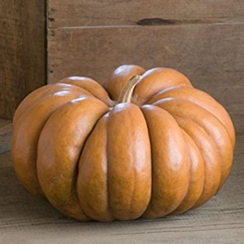 Here is the Musquee de Provence Pumpkin Cucurbita moschata. It is also known as the Fairytale pumpkin. This French heirloom i