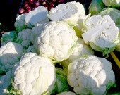 Snowball X Cauliflower