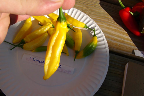 Here is the Lemon Drop Pepper also known as theají limon pepper, Capsicum baccatum, Scoville units: 10,000 ~ 30,000 SHU.Do