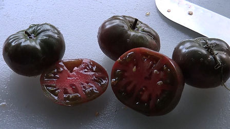 The Black Krim tomato aka Black Crimea tomato, Solanum lycopersicum, was Found in Krim, Russia in 1990 by Lars Olov Rosenstrom of Bromma, Sweden. TheseBeefsteak type fruits are a unique combination of violet-brown and purple red. They turn almost black with sufficient sunlight and heat. Excellent full flavor. Plants are good producers with up to 1 pound tomatoes. Indeterminate  70-90 days from transplant.