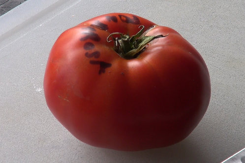 Here is the Ponderosa Red Tomato Solanum lycopersicum. It is also known as the Ponderosa Scarlet tomato.  Grown in the U.S. s