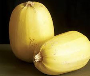 Here is the Spaghetti Squash, Cucurbita pepo subsp. pepo.  It is also known as the Gold String Melon. Thy are among the winter squashes. This squash has light yellow fruits with very sweet flesh.The squash Can be stored several months in a cool, dry place. It is a strange vegetable in that the inside has a Spaghetti like inside and can be eaten like such. They can be bake or boiled and a great pasta alternative. The fruits can to around 3 to 6 Lbs and from 6 to 10 inches long. Plants or vine get to 12 feet long with 4 to 5 fruits per vine. We really like to cook them over a grill and eat them right out of the shell! Seeds are also great roasted. Open pollinated 100 days.